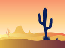 Cactus desert sunset stock illustration