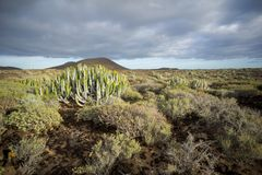 Cactus Desert Sunset in Tenerife Canary Island. Calm Cactus Desert Sunset in Tenerife Canary Island royalty free stock images