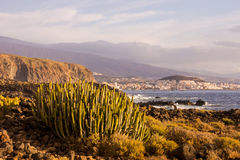 Cactus Desert Sunset in Tenerife Canary Island Royalty Free Stock Image