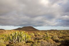 Cactus Desert Sunset in Tenerife Canary Island. Calm Cactus Desert Sunset in Tenerife Canary Island Royalty Free Stock Photos