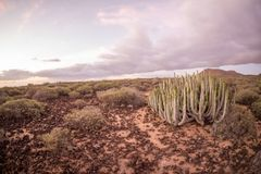 Cactus Desert Sunset in Tenerife Canary Island. Calm Cactus Desert Sunset in Tenerife Canary Island Stock Photography