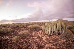 Cactus Desert Sunset in Tenerife Canary Island. Calm Cactus Desert Sunset in Tenerife Canary Island stock photography