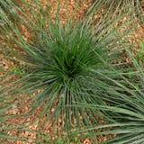 Cactus on gravels Stock Photo