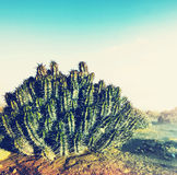 Cactus in desert Stock Photos