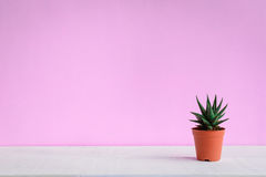 Cactus on the desk with sweet pink walls. And minimal pastel style Royalty Free Stock Photography