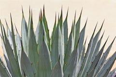 Cactus detail Stock Photos