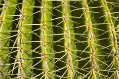 Cactus detail Royalty Free Stock Photos