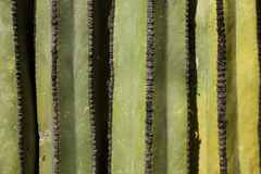 Cactus Detail Background Royalty Free Stock Photos
