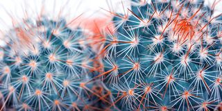 Free Cactus Detail Closeup Art Fashion Design. Cacti Minimal Concept. Blue Neon Mood On White Background. Trendy Bright Color. Stock Photography - 124189772