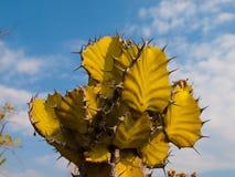 Cactus detail Stock Images