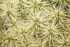 Cactus detail Stock Photo