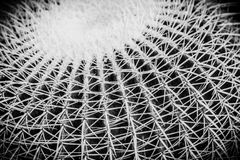 Cactus details macro close up Royalty Free Stock Image