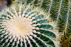 Cactus details macro close up Stock Images