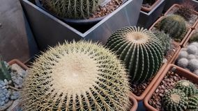 Cactus details macro close up stock footage