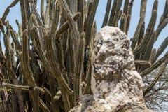 Cactus detrás de la roca vieja Imágenes de archivo libres de regalías
