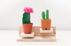 Cactus deux coloré Photos libres de droits