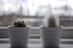 Cactus deux près d'une fenêtre image stock