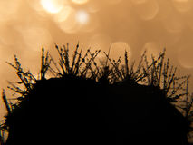 Cactus in dew Royalty Free Stock Images