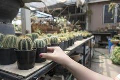 Cactus di acquisto nel negozio immagine stock