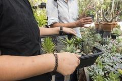 Cactus di acquisto nel negozio immagini stock libere da diritti