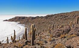 Cactus di Incahuasi Immagini Stock