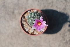 Cactus di me Immagine Stock