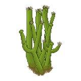 Cactus di stile del pixel di vettore Fotografia Stock