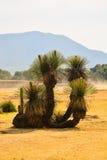 Cactus di Teotihuacan Fotografia Stock