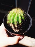 Cactus di tocco Fotografia Stock Libera da Diritti