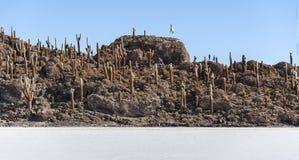 Cactus di Trichoreceus su Isla Incahuasi Isla del Pescado in mezzo pianura Salar de Uyuni, Bolivia del sale del ` s del mondo all Fotografia Stock