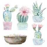 Cactus dibujados mano del saguaro de la acuarela Fotos de archivo