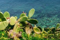 cactus dichtbij het overzees Royalty-vrije Stock Fotografie
