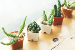 Cactus die op het venster wordt geplant royalty-vrije stock afbeelding