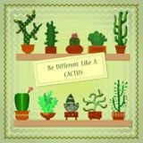 Cactus différent Illustration de Vecteur