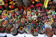 Cactus in different colours Royalty Free Stock Photo