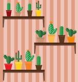 Cactus differenti sugli scaffali, situati sui precedenti della carta da parati illustrazione di stock