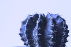 Cactus Diseño de la moda de la galería de arte Aún vida mínima MES verde fotografía de archivo