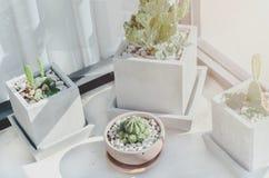 Cactus disposé dans des pots photos stock