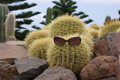 Cactus divertente con i vetri immagini stock