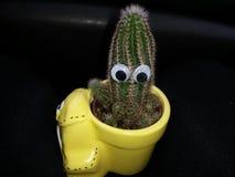 Cactus divertente in un vaso decorato giallo Fotografia Stock Libera da Diritti