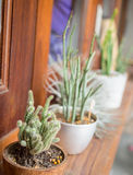 Cactus DIY gardening on room porch for interior home decoration Stock Images