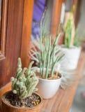 Cactus DIY que cultiva un huerto en el pórtico del sitio para la decoración casera interior Imagenes de archivo
