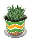 Cactus domestico Immagine Stock