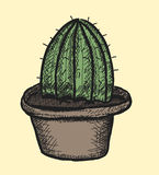 Cactus, doodle illustration icon Stock Images
