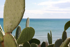 Cactus door het overzees Royalty-vrije Stock Afbeeldingen