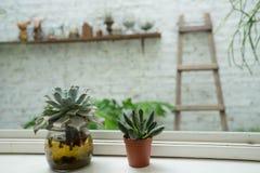 Cactus dos en la ventana Imagen de archivo libre de regalías