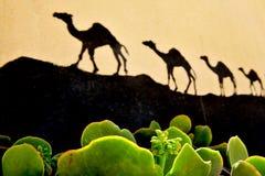 Cactus e cammelli del deserto Fotografia Stock