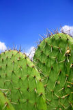 Cactus e cielo Fotografia Stock Libera da Diritti