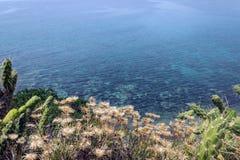 Cactus e fiori sui precedenti del mare blu La Grecia Concentrato Fotografia Stock