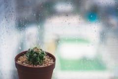 Cactus e gocce di pioggia Immagini Stock